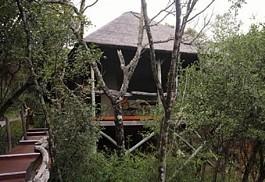 1-lalibela-treetops.jpg