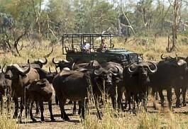 kruger-park-buffalo-herd.jpg