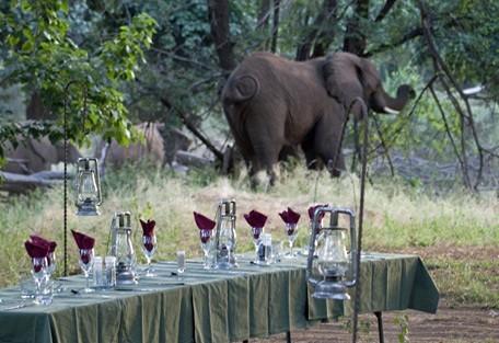 kruger-park-elephant-lunch.jpg