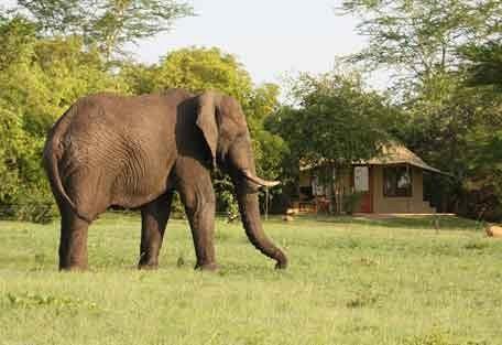 kruger-park-elephant.jpg