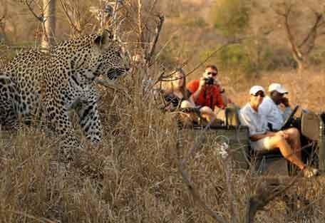 kruger-park-leopard.jpg