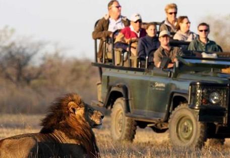 kruger-park-lion-drive.jpg