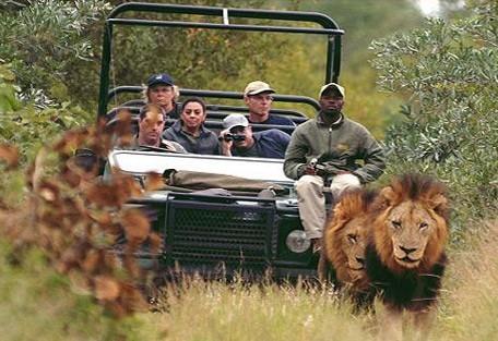 kruger-park-lions-drive.jpg