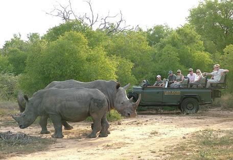 kruger-park-rhino.jpg