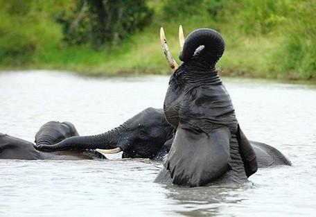 elephant-water.jpg