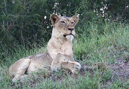 sunsafaris-1-naldedi-bush-camp.jpg