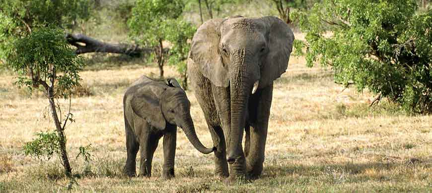 balule-elephant.jpg