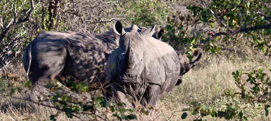 balule-rhino.jpg
