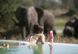 1-elephant-watch-pool.jpg