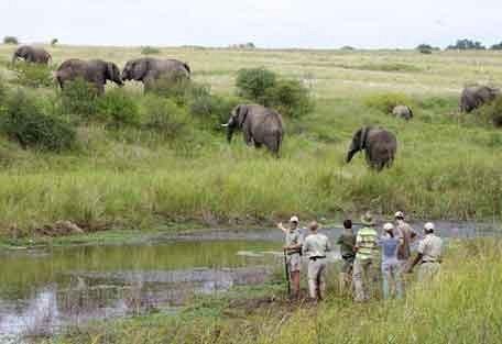 2-kapama-elephant-walk.jpg