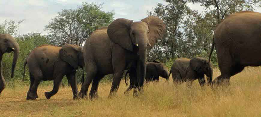 sunsafaris-2-elephant-drift.jpg