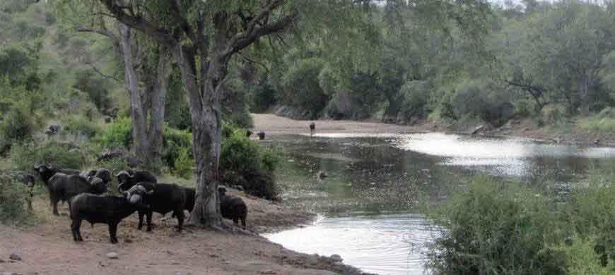 sunsafaris-3-elephant-drift.jpg
