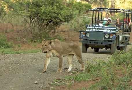 2-lioness-pafuri.jpg