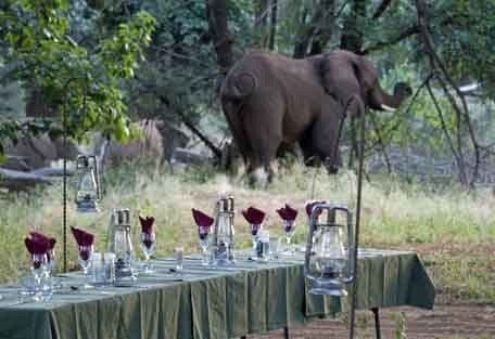 5-dinner-elephant.jpg