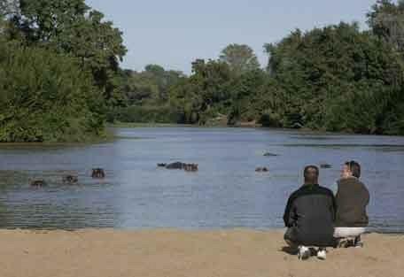 6-hippos-watch.jpg