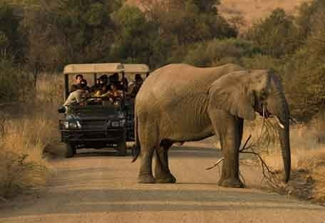 7-elephant-drive.jpg