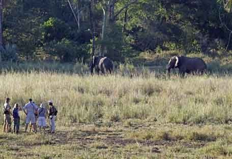 9-elephant-walk.jpg