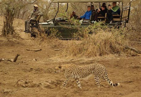 cheetah-drive-two.jpg