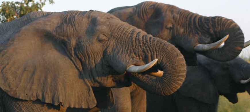 manyeleti-elephant.jpg
