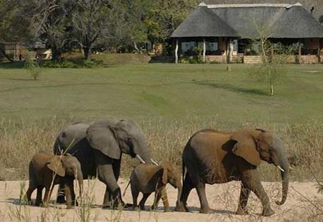 5-sabi-sand-elephant-lodge.jpg