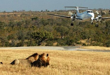 8-sabi-sand-lion-airstrip.jpg