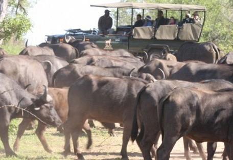9-sabi-sand-buffalo-drive.jpg