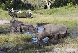 sunsafaris-1-elephant-plains.jpg