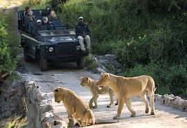sunsafaris-1-lion-sands-ivory.jpg
