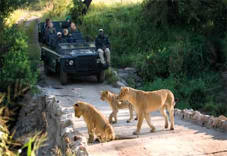 sunsafaris-lion-sands-river-456-1.jpg