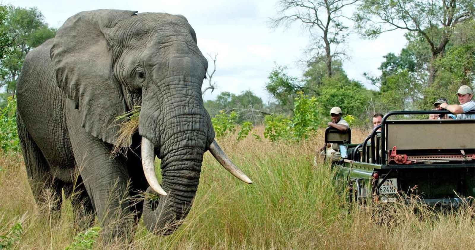 Notten's Bush Camp | Sun Safaris