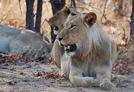 sunsafaris-10sunsafaris-singita-boulders-lodge.jpg