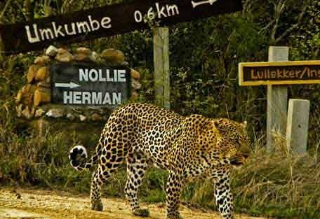 sunsafaris-1-Umkumbe-Safari-Lodge.jpg