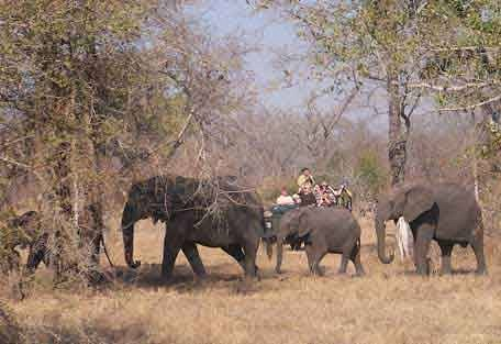 sunsafaris-12-Umkumbe-Safari-Lodge.jpg
