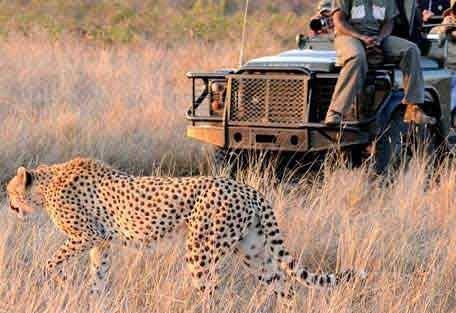 sunsafaris-13-Umkumbe-Safari-Lodge.jpg