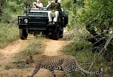 1-leopard-drive.jpg