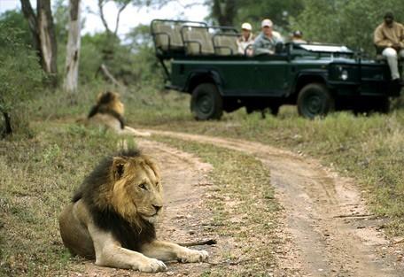 2-lion-drive.jpg