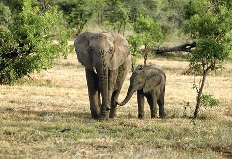 4-elephants.jpg