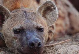 sunsafaris-1-sunsafaris-nkaya-lodge.jpg