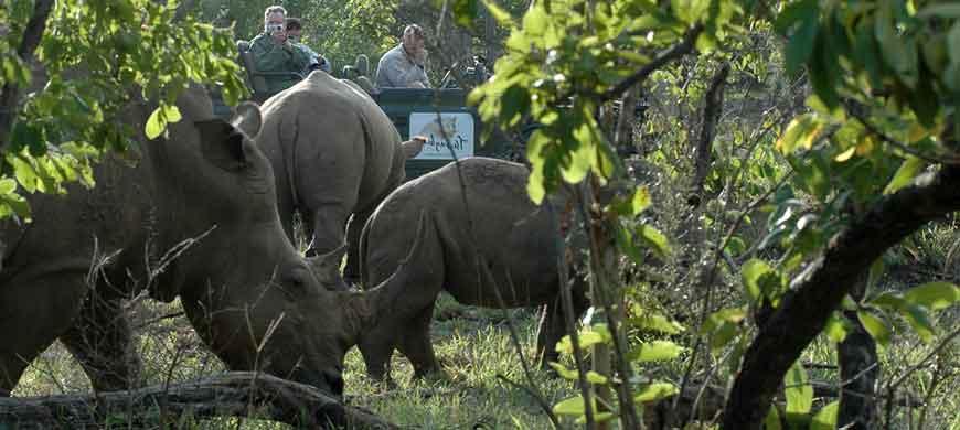 rhino-thornybush.jpg