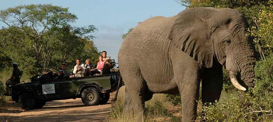 thornybush-elephant.jpg