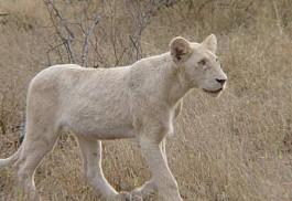 sunsafaris-1-kambaku-safari.jpg
