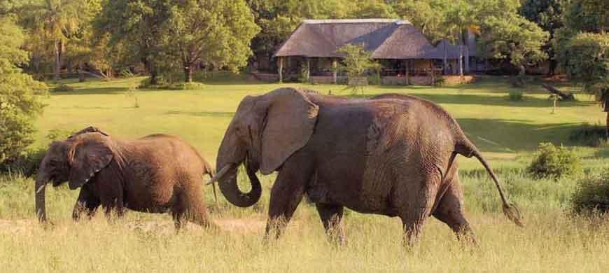 kruger-national-park-elephants-idube.jpg