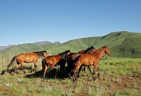 456_kzn_horses.jpg
