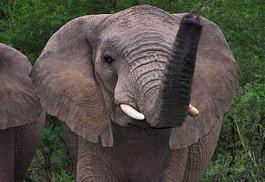 456_nambiti_elephan.jpg