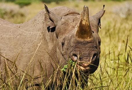 456_rhinoreserve_blackrhino.jpg
