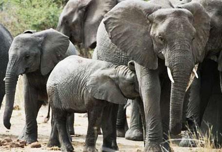 456_rhinoreserve_elephant.jpg
