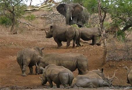 456_rhinoreserve_mudwallow.jpg