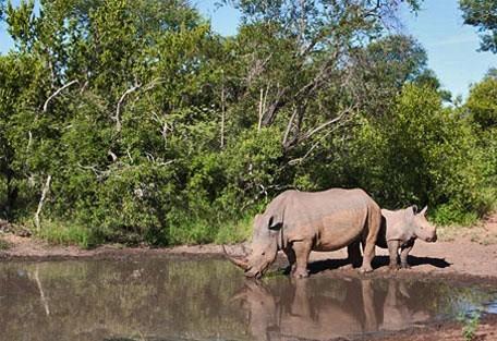 456_makalali_rhino.jpg