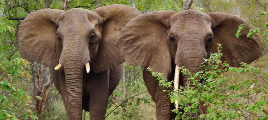 870_makalali_elephant.jpg