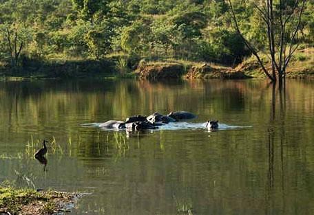 456_mabalingwe_hippos.jpg